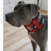 Original Illusion Collar Trainingshalsband & Leine des amerikanischen Hundeflüsterer Cesar Millan, Größe M, Rot -